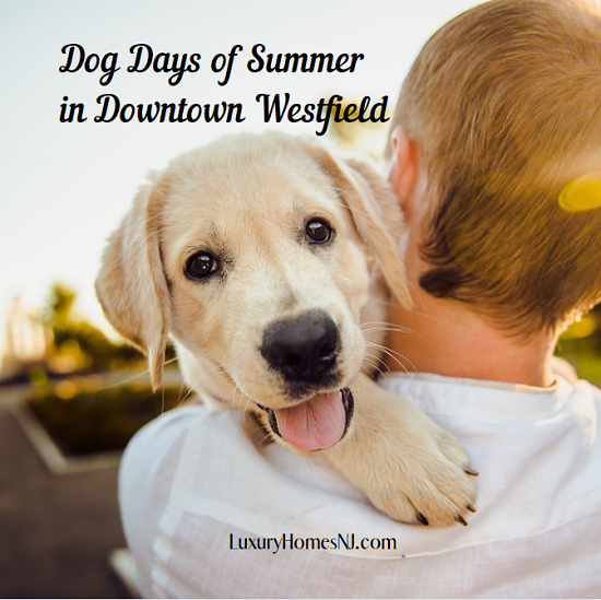 Bring your favorite pooch to the Dog Days of Summer event in Downtown Westfield on Sunday, Aug 11, 2019. Lots of treats and fun for animal and humans alike.